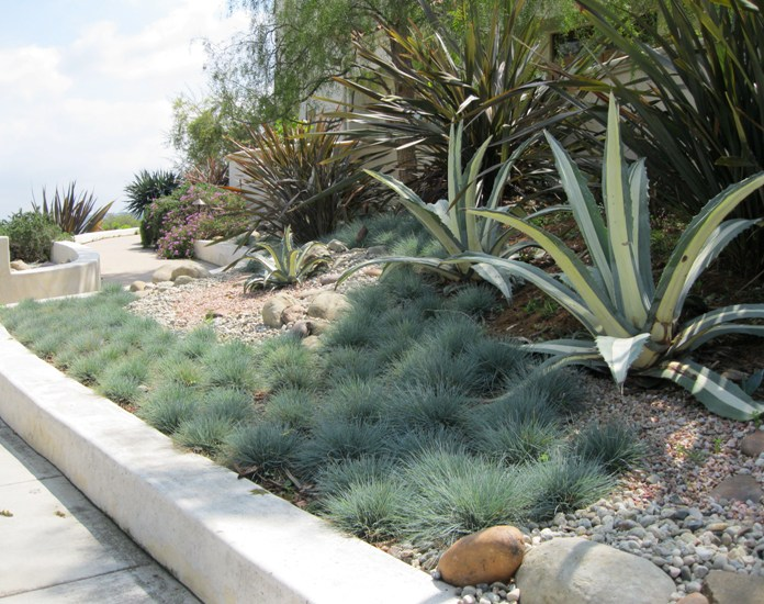 April 2011 newsletter green sheet gregory davis for Ornamental grasses that stay green all year